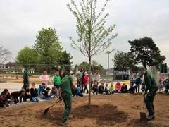 Firma Reuter sponsert Zierkirsche für Gönser Grundschule