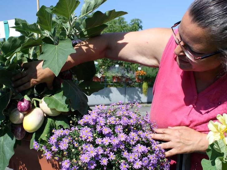 Gemüse im Blumenkasten
