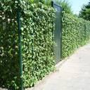 öffentliches Grün in Arnheim
