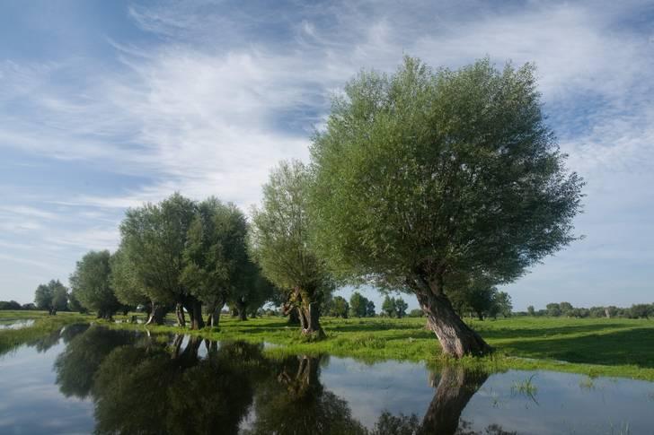 """""""Restore Nature"""": NABU fordert verbindliches EU-Gesetz zur Wiederherstellung der Natur"""