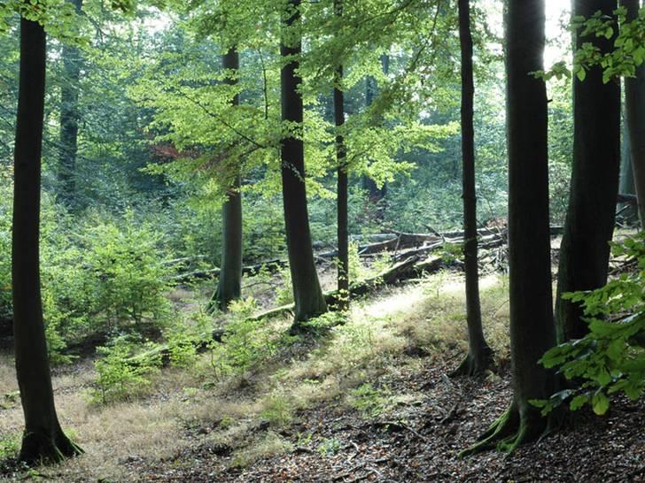 Waldkalkungen