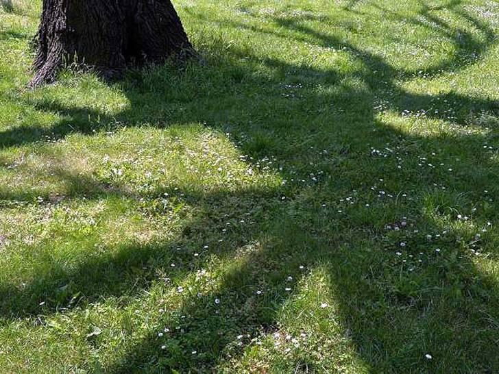 Grünanlagen spenden Schatten