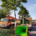 Baumpflege-Team Willms