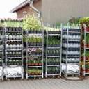 Gartenstauden
