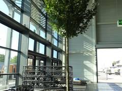 C2tree Projekt Stadtbäume