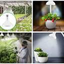 Eine Lampe für alle Pflanzen: Schnelleres Wachstum mit Sonnenlicht