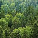 Waldbericht