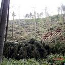 Waldschäden des Orkan Kyrill