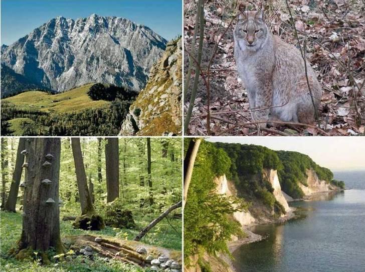 Nationalpark für Deutschland