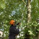 Der neue STIHL HTA 135 für die professionelle Baumpflege