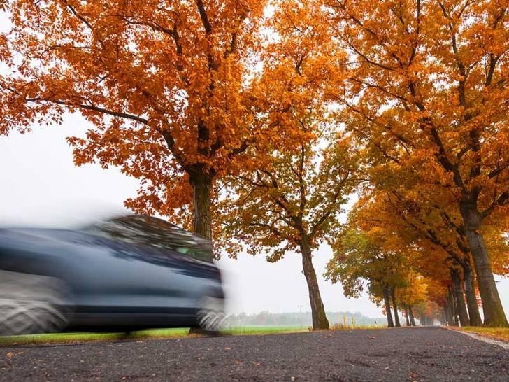 Verkehrssicherheit von Bäumen