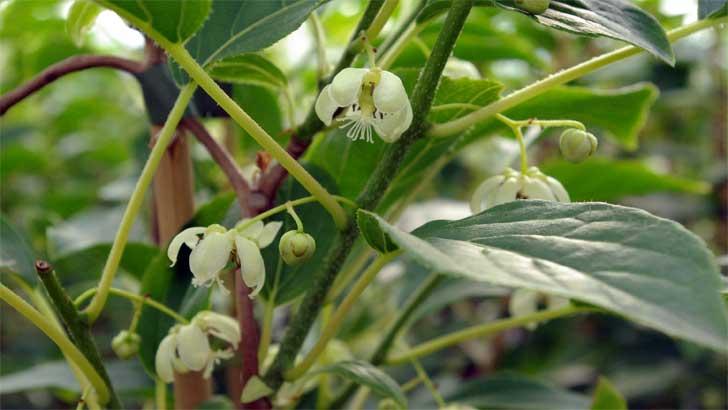 FLORALL Awards für Pflanzen mit Mehrwert
