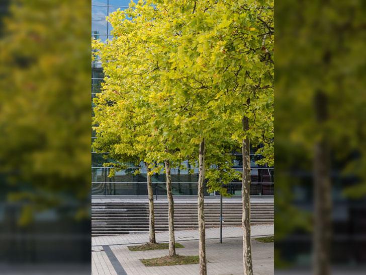 Bepflanzte Baumscheiben