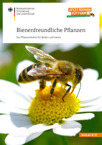 """Bienenbuffets statt Steinwüsten - Bidens """"Bienenstern"""" ist die Balkonpflanze des Jahres"""