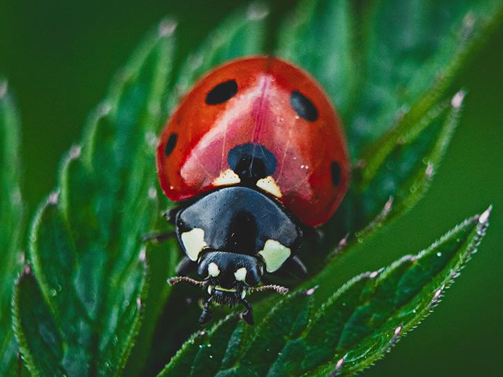 Insektenschutz: Bundesregierung muss sich zur Umsetzung ihrer eigenen Beschlüsse bekennen