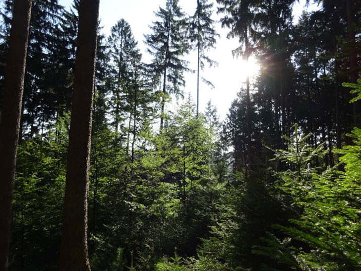 Zukunftswald
