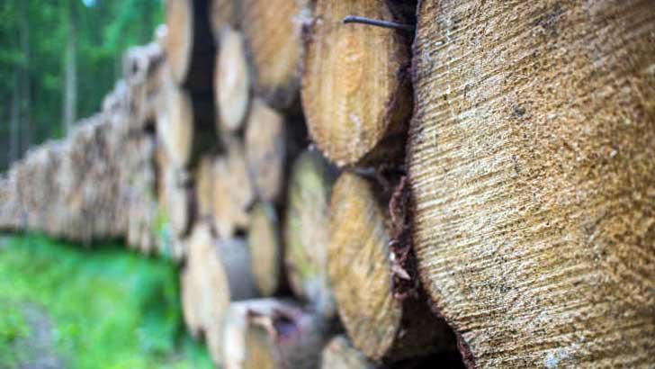 Holzpolder