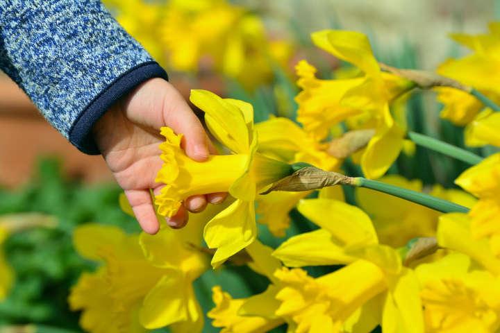 Frühjahrsblüher bringen Farbe in den Garten