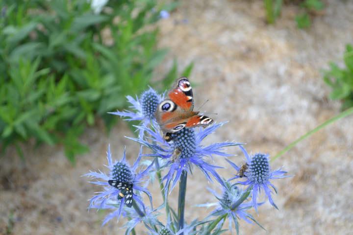 Erster Internationaler Schmetterlingskongress für Artenvielfalt und Umweltschutz am 30. Juni 2021
