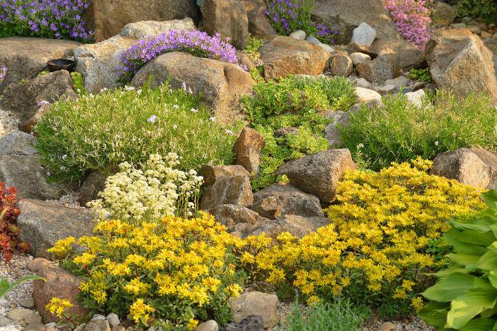 Wussten Sie schon, dass Steingärten pflegeleichter als Schottergärten sind?