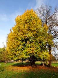 Baum des Jahres 2015