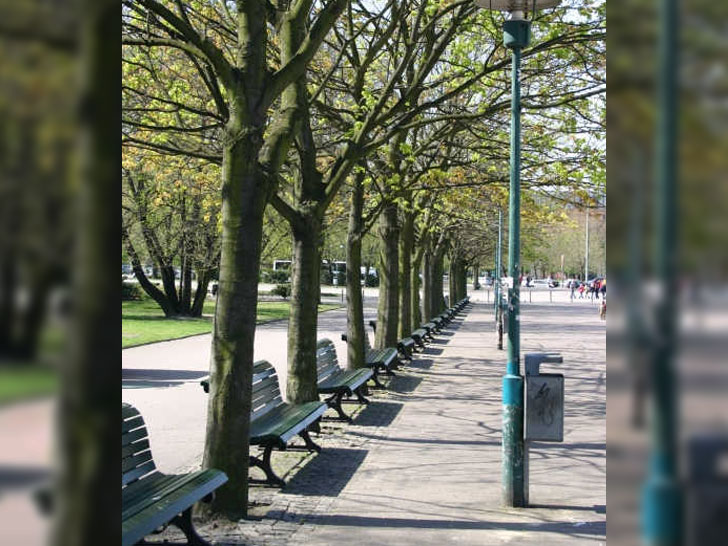 Stadtbäume