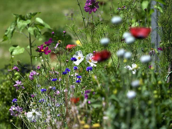 ökologisch gepflegter Garten