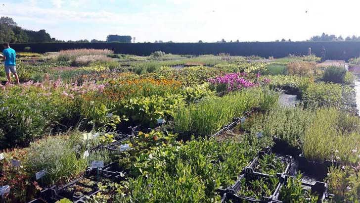 europäische Arbeitsgruppe Blumen und Pflanzen
