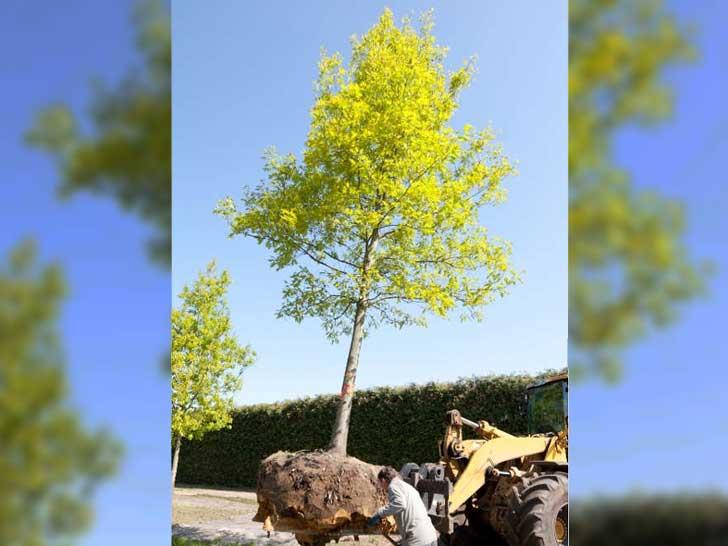 Tag des Baums