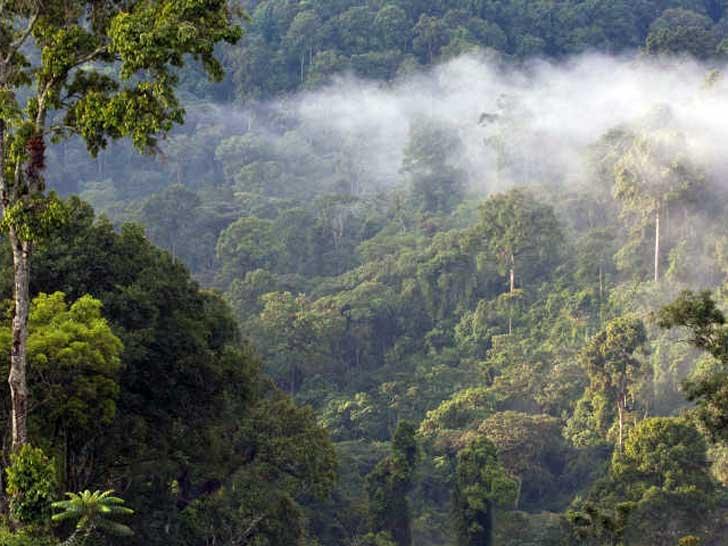 Bergnebelwälder Äthiopiens