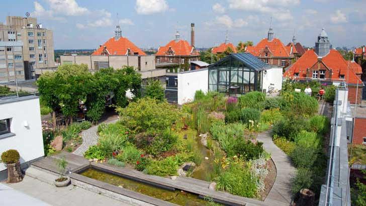 Genutzte Dachgärten