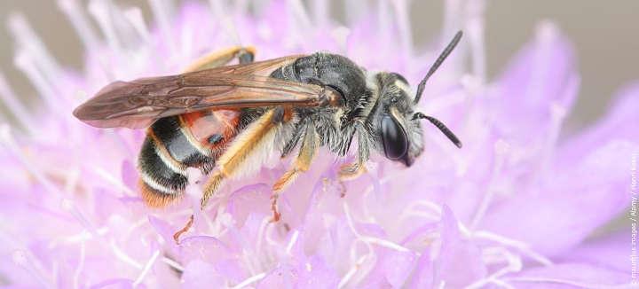 Besserer Schutz für Insekten durch weniger Pflanzenschutzmittel-Einsatz