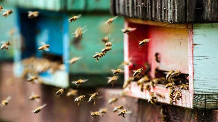 Bienen fliegen in Bienenstock