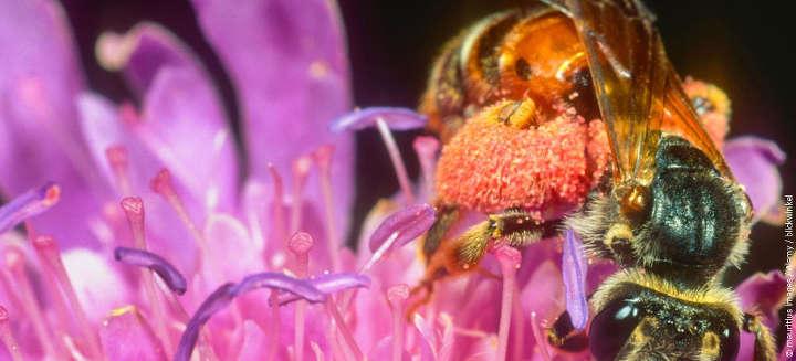 Kabinett beschließt Rechenschaftsbericht 2021 zur Nationalen Strategie zur biologischen Vielfalt