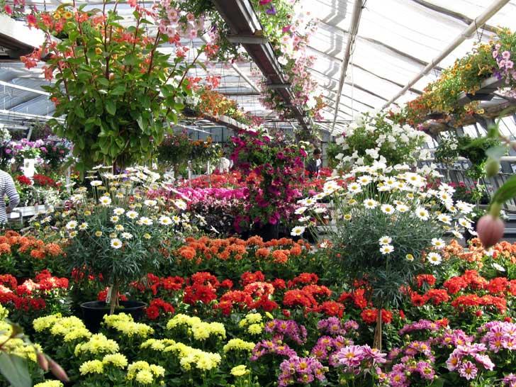 Blumen und Zierpflanzen