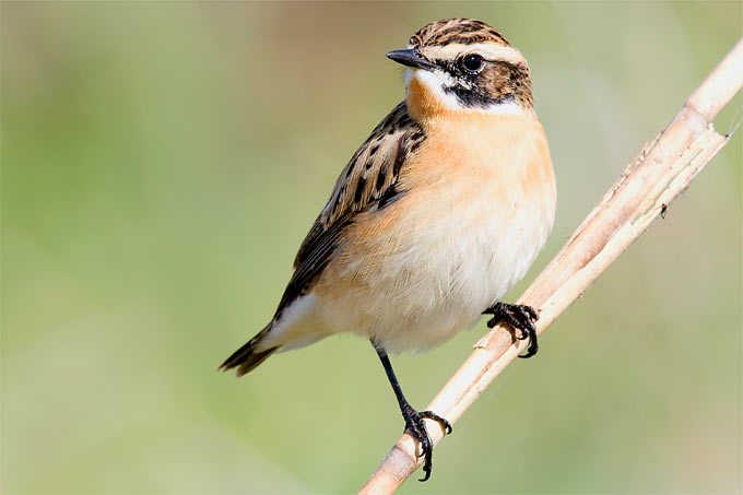 Neue Rote Liste der Brutvögel Deutschlands vorgelegt