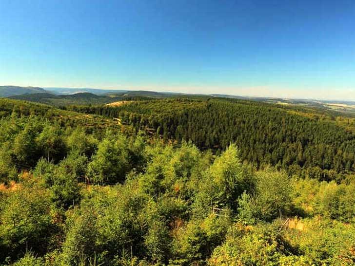 Briloner Stadtwald