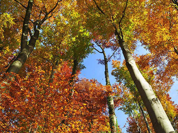 NABU legt Studie zum Einfluss der Forstwirtschaft auf den Wasserhaushalt vor