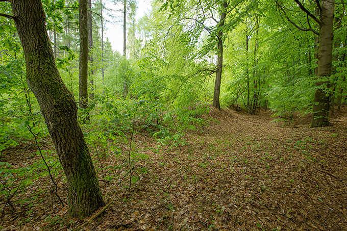 NABU fordert Neuausrichtung der Waldpolitik in Deutschland