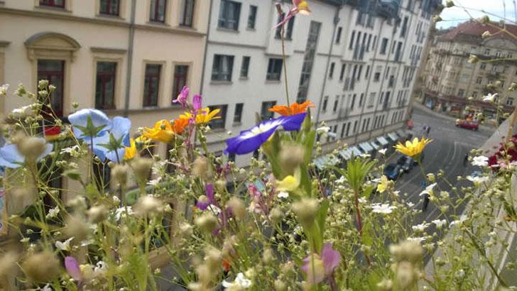 Artenvielfalt in der Stadt