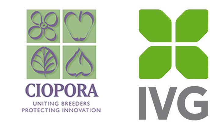 IVG und CIOPORA
