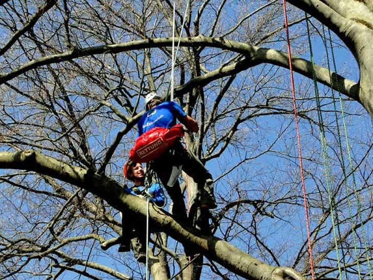 Baumkletterer in der Baumpflege