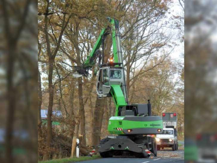 Baumpflege an Straßenrändern