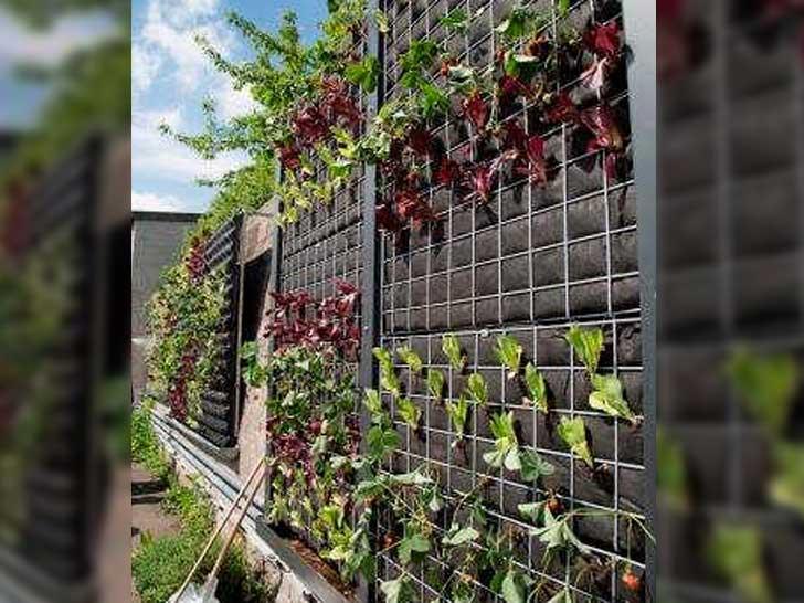 Gemüse an Wand