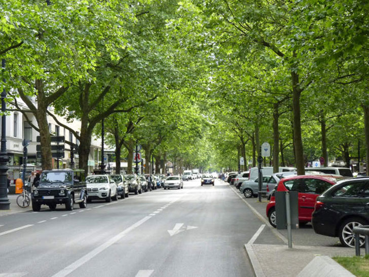 Straßenrandbepflanzungen