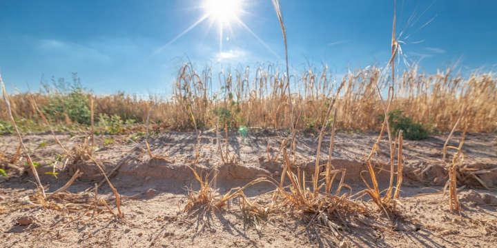 Neue Analyse zeigt Risiken der Erderhitzung für Deutschland