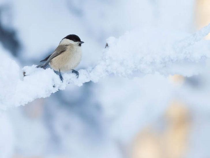 NABU: Vogelzähler und Haussperlinge auf Höchststand