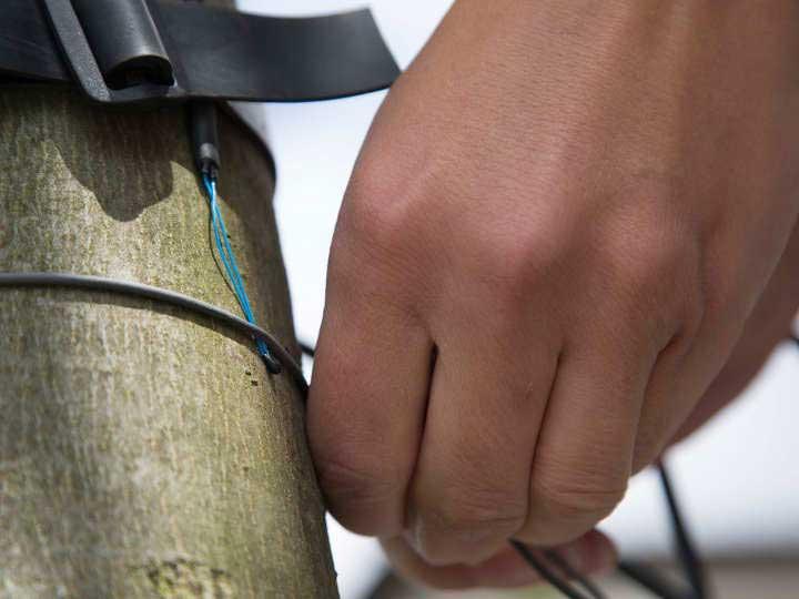 Fieberkurven von Bäumen