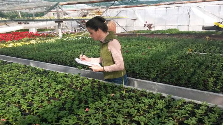 illegale Pflanzenvermehrung