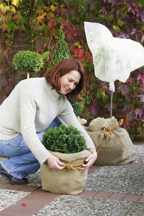 Floragard: Kübelpflanzen winterfest machen